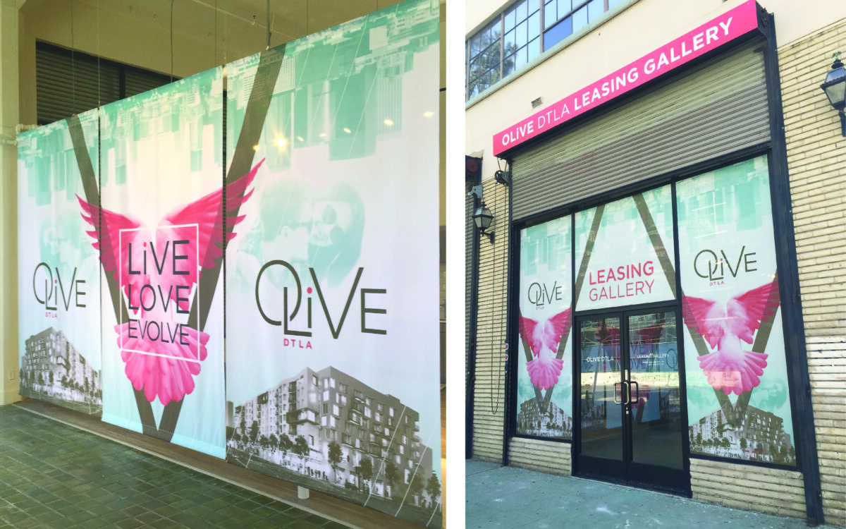 Olive leasing